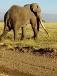Safari in Kenya with Denhum Holidays